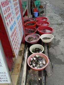 Meeresfrüchte und Fisch vor chinesischem Restaurant