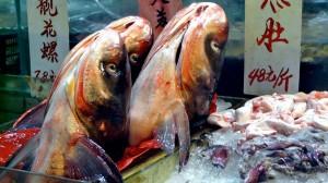 Spezialität Fischkopf in China