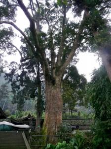Geschützter Baum am Emei Shan
