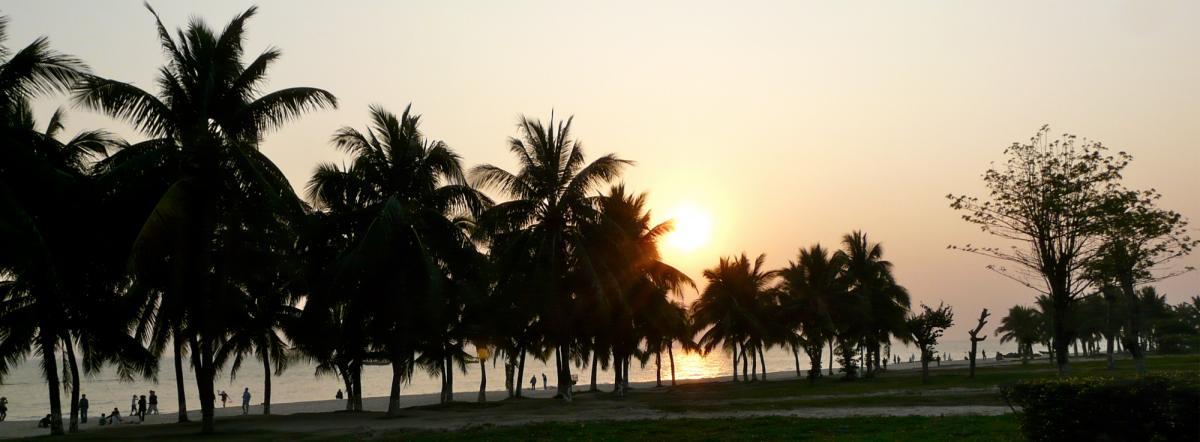 Palmen am Strand auf Hainan