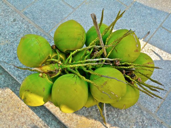 Hainan Kokosnüsse