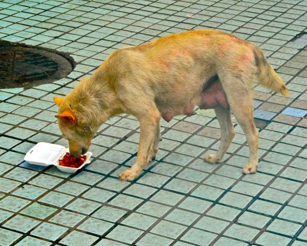 Straßenhund beim Fressen